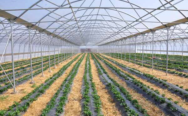 Kosovë-Ministria-e-Bujqësisë-planifikon-43-milionë-euro-mbështetje-për-fermerët-në-2015-1-600x370
